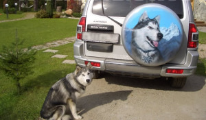 Собака на запасном колесе